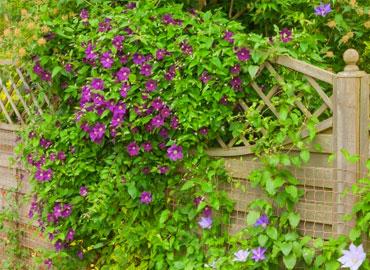 Les plantes et les graines pour le jardin